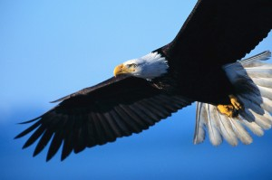 We will rise up like the eagle.